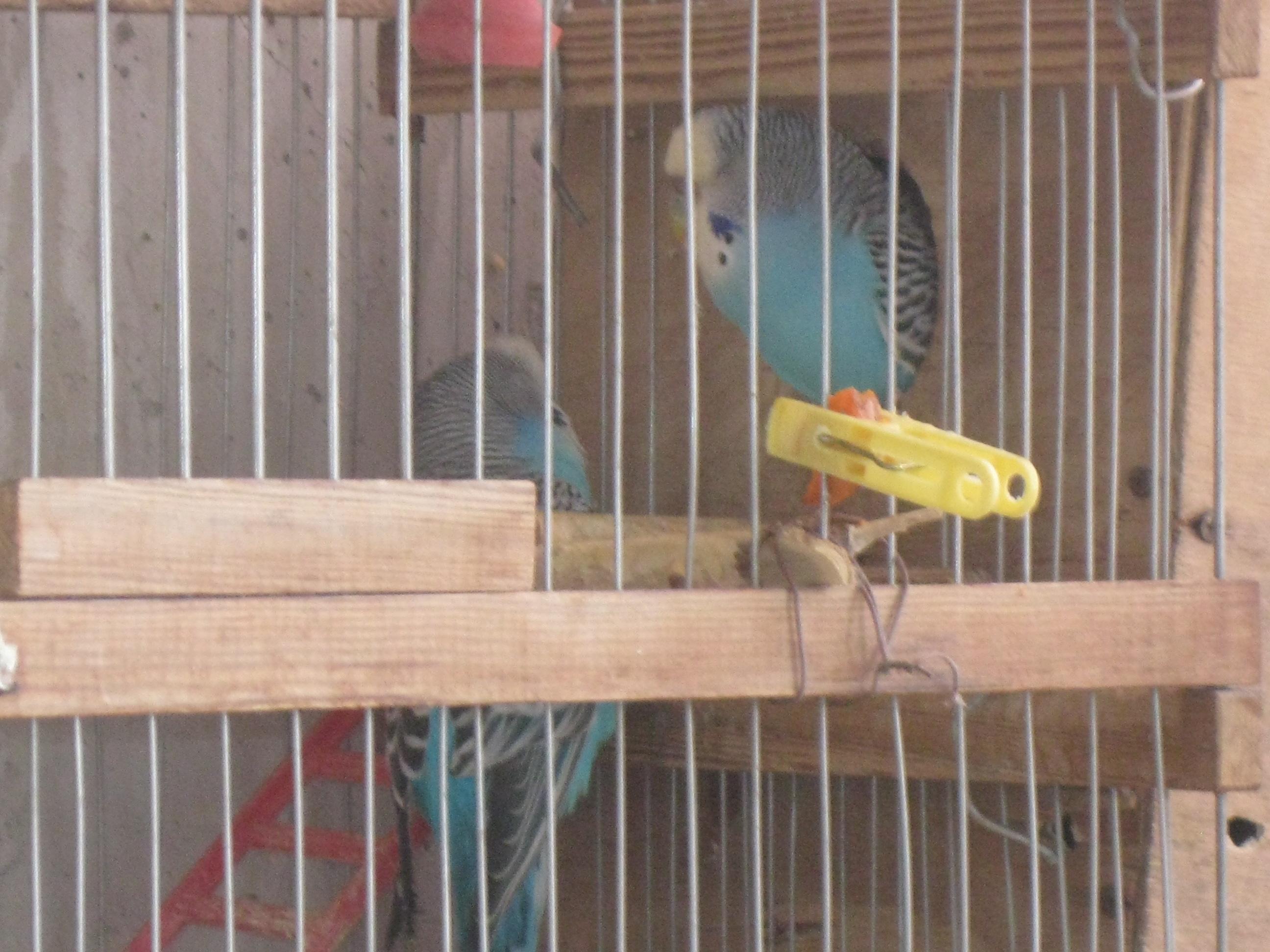 Домик попугаю своими руками 28