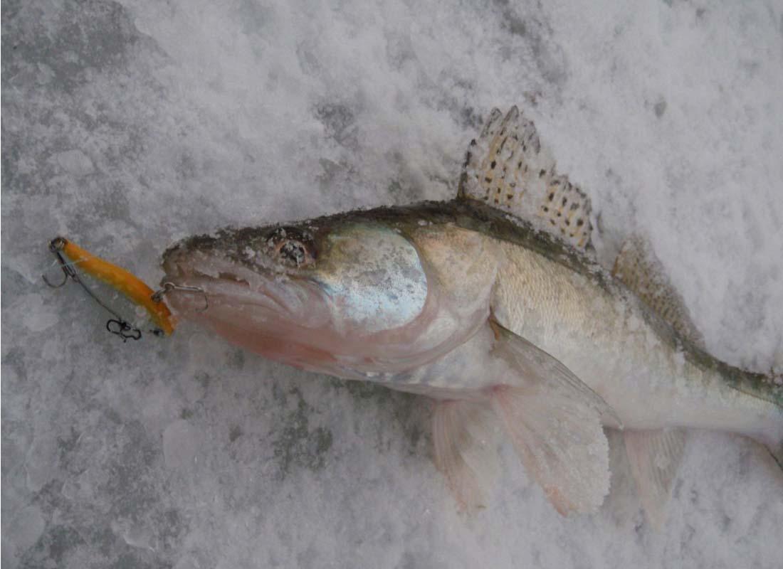 ловля судака на печенежском водохранилище видео